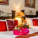 pet-friendly-hotel-antigua-guatemala-2